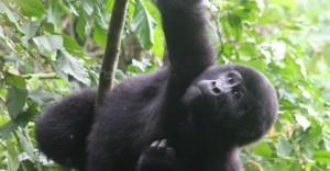 bwindiuganda2012-1-770x400